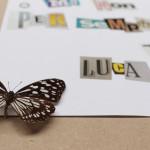 come una mosca sul burro (part). farfalla e carta su mdf cm. 42,5 x 32,5. 2014